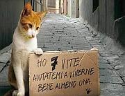 foto gatto con cartello: ho 7 vite aiutatemi a viverne bene almeno una