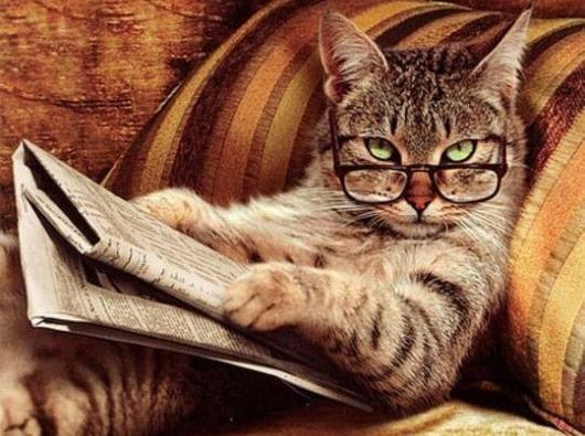 gatto che legge il giornale